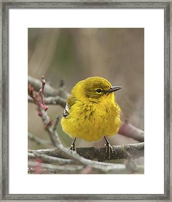 Framed Print featuring the photograph Little Yellow by Lara Ellis
