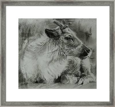 Littlest Reindeer Framed Print by Susie Gordon