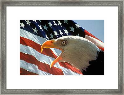 Live Free Or Die Framed Print by Carl Purcell