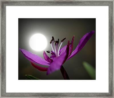 Live In The Light Framed Print