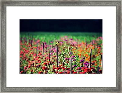 Live In The Sunshine Framed Print