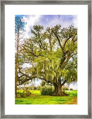 Live Oak And Spanish Moss 2 - Paint Framed Print by Steve Harrington