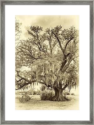Live Oak And Spanish Moss 2 - Sepia Framed Print by Steve Harrington