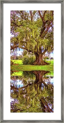 Live Oak And Spanish Moss - Reflection Framed Print by Steve Harrington