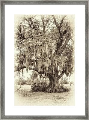 Live Oak And Spanish Moss Sepia Framed Print by Steve Harrington
