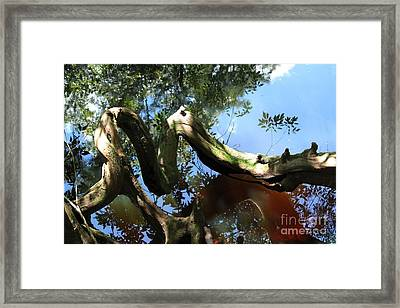 Live Oak Art Framed Print