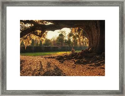 Live Oak At Audubon Park Framed Print