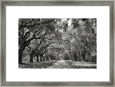 Live Oak Avenue Framed Print by Steven Ainsworth