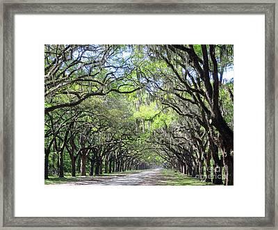 Live Oak Canopy Framed Print