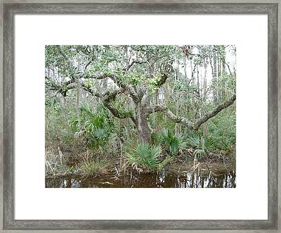 Framed Print featuring the photograph Live Oak Dancing by Jeanne Kay Juhos
