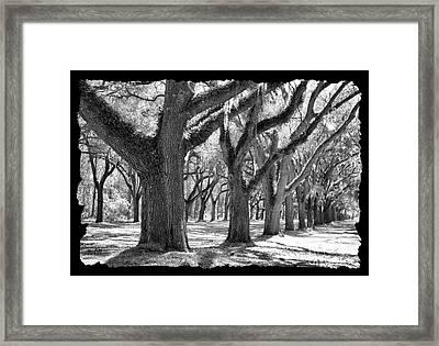 Live Oak Giants - Black And White Framing Framed Print by Carol Groenen