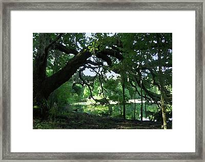 Live Oak Hidden Pond Framed Print by Marnie Hutcheson