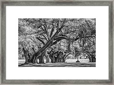 Live Oak Journey 2 - Paint Bw Framed Print by Steve Harrington