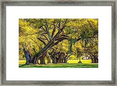 Live Oak Journey 2 - Paint Framed Print by Steve Harrington