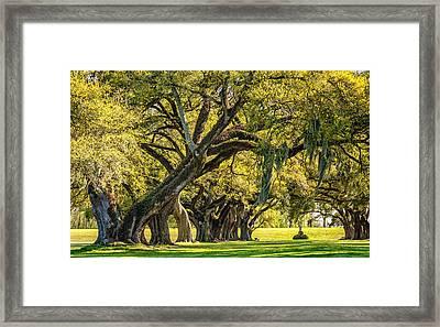 Live Oak Journey 2 Framed Print by Steve Harrington
