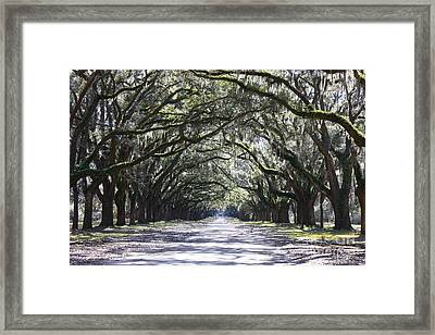 Live Oak Lane In Savannah Framed Print by Carol Groenen