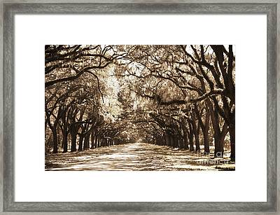 Live Oak Lane In Sepia Framed Print by Carol Groenen