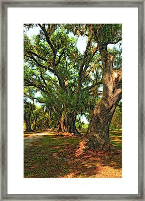 Live Oak Lane Framed Print by Steve Harrington