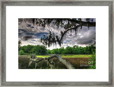 Live Oak Marsh View Framed Print by Dale Powell