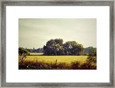 Live Oak Oasis Framed Print