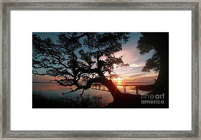Framed Print featuring the photograph Live Oak Sunrise by Benanne Stiens