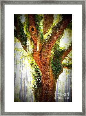 Live Oak With Cypress Beyond Framed Print by Carol Groenen