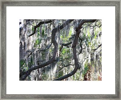 Live Oak With Spanish Moss And Palms Framed Print by Carol Groenen