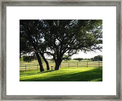 Live Oaks At Sunset Framed Print