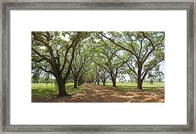 Live Oaks Country Road Framed Print
