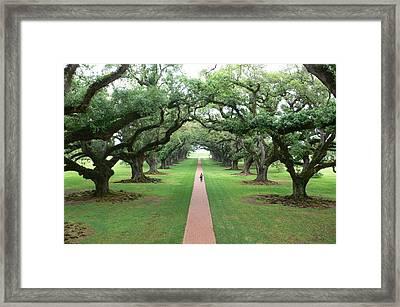 Live Oaks Framed Print