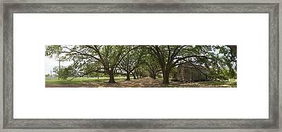Live Oaks Panorama Framed Print
