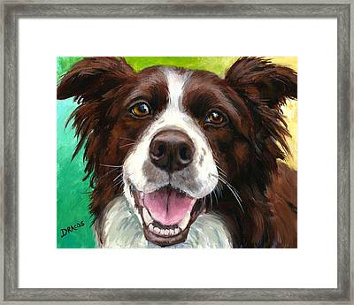 Liver And White Border Collie Framed Print by Dottie Dracos