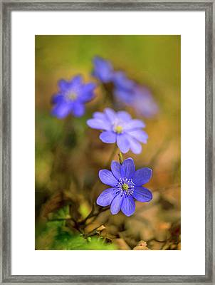 Liverworts In The Afternoon Sunlight Framed Print