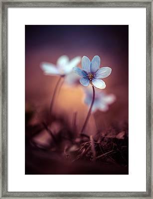 Liverworts Framed Print