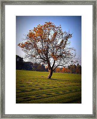 Living Amongst Heroes Framed Print by Glenn McCarthy Art and Photography