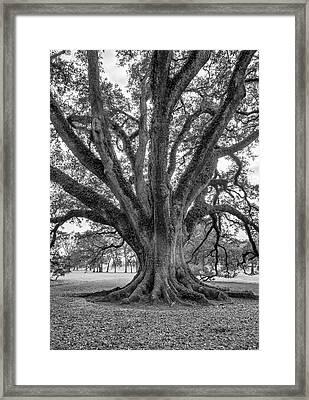 Living History Bw Framed Print