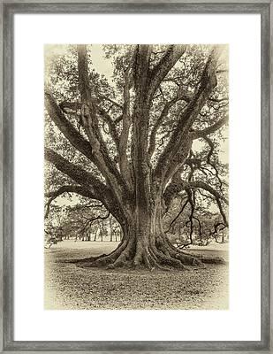 Living History Sepia Framed Print by Steve Harrington