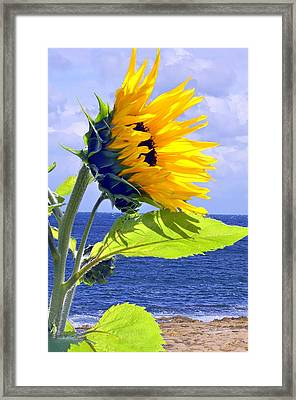 Living Is A Blessing..... Framed Print