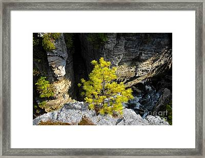 Living On The Edge Framed Print by David Lee Thompson