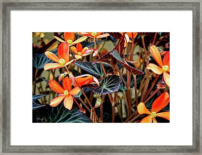 Living Tapestry Framed Print