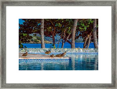 Living The Life Framed Print by Camille Lopez
