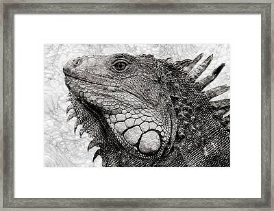 Liz Framed Print by Jack Zulli