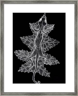 Lizard And Leaf Framed Print by Nick Gustafson