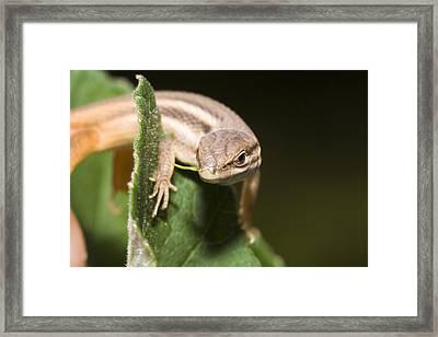 Lizard Framed Print by Andre Goncalves
