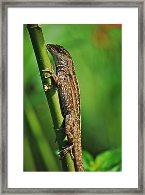 Lizard Framed Print by Michael Peychich