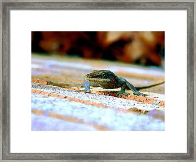 Lizard On A Brick Wall Framed Print