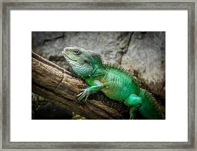 Lizard On Branch Framed Print