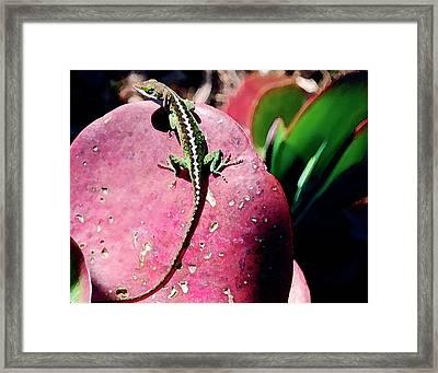 Lizard On Leaf Framed Print