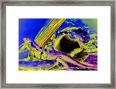 Lizard Framed Print by Peter  McIntosh