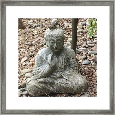 Lizard Zen Framed Print by Kim Nelson